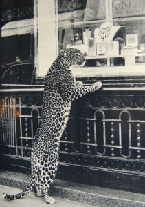 life-size-leopard-ad-cartier-large-msg-1133203503-2