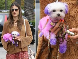 alessandra-ambrosio-purple-pink-pooch