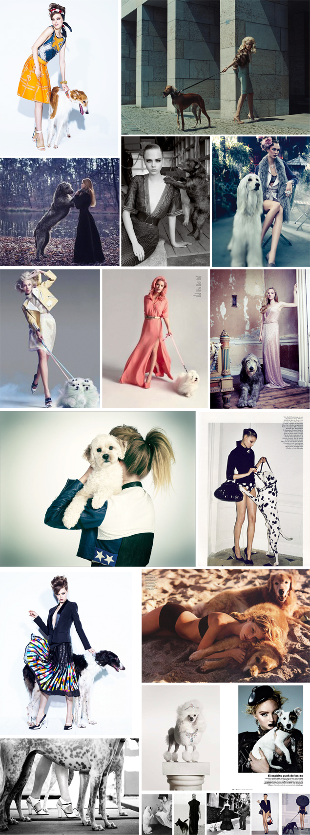 fashion dogs models