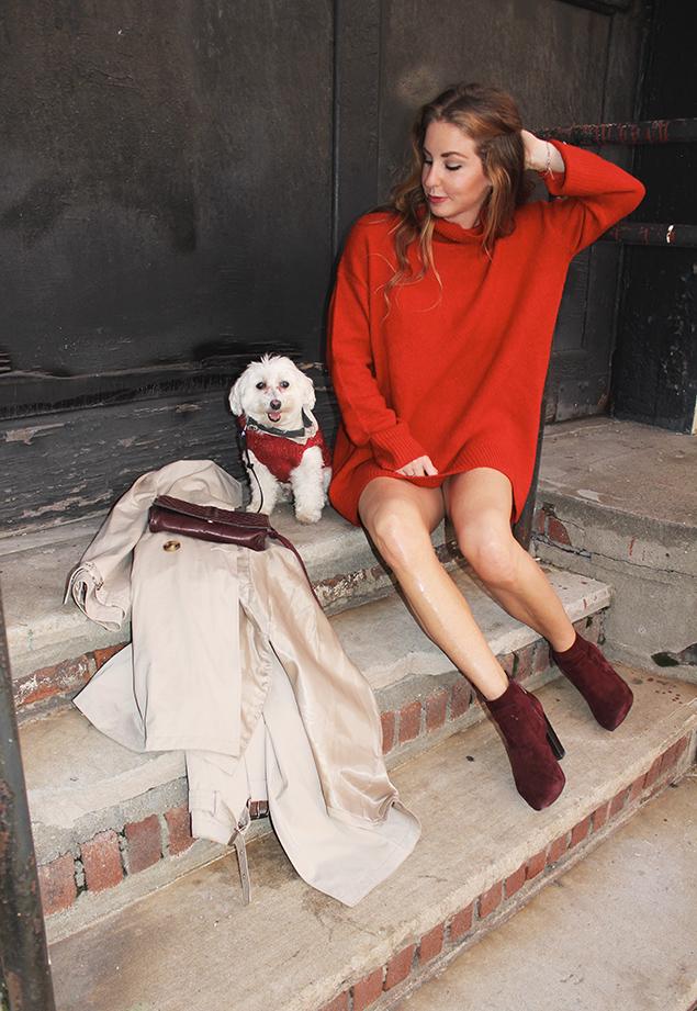 smitty dog sweater dress