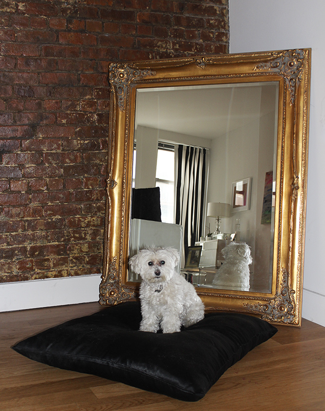 smitty in the city maltipoo