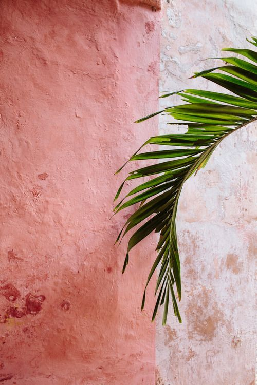 blush wall color
