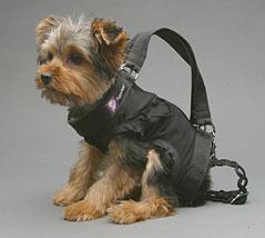 dog purse 2