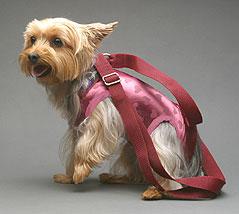 dog purse 3