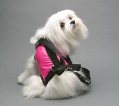 dog purse 4