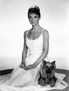 Audrey-Hepburn-wcute-dog