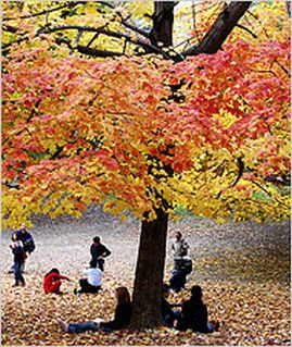 fall_leaves_4646